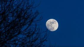 Maanlicht onder bomen Stock Foto's