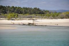 Maanpunt, Fraser Island royalty-vrije stock fotografie