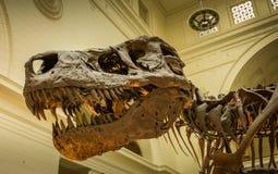 22 MAART, 2016 - CHICAGO: het skelet van Tyrannus Saurus aangaande Royalty-vrije Stock Foto's