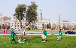 15 maart, de kustpark van 2017, Baku, Azerbeidzjan De tuinlieden veroorzaken het tuinieren in het stadspark Royalty-vrije Stock Fotografie