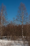 Maart-hout Stock Foto's
