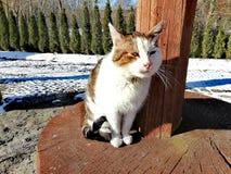 Maart-kat en de eerste zonnige dagen royalty-vrije stock foto
