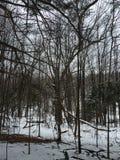 Maart-sneeuw stock foto's