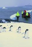Maart van de Pinguïnen royalty-vrije stock fotografie
