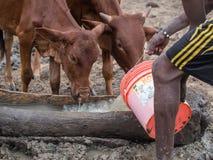Maasai 免版税库存照片