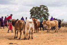 Maasai 图库摄影