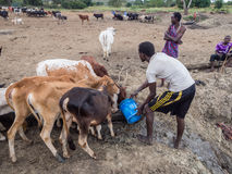 Maasai Obrazy Royalty Free