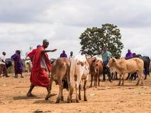 Maasai Obraz Stock