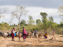 Maasai 免版税图库摄影
