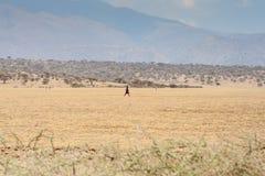 Maasai dans le cordon ouvert Image libre de droits
