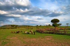 Maasai by i Kenya Arkivfoto