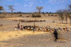 Maasai-Kinder leben Kuhvieh, Tansania in Herden lizenzfreie stockbilder