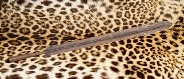 Maasai Lion Spear Head. royalty free stock photos