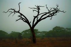 Maasai Mara比赛预留 免版税库存图片