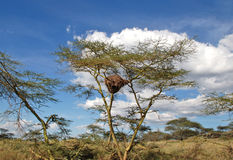 The Maasai Mara National Reserve, Kenya Royalty Free Stock Photography