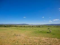 Maasai Mara National Reserve in Kenya Stock Image