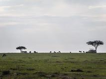 Maasai Mara Plaine Στοκ εικόνες με δικαίωμα ελεύθερης χρήσης