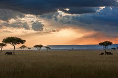 Maasai Mara sunset landscape. Sunset landscape in the Maasai Mara National Reserve, Kenya royalty free stock photography