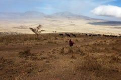 Maasai Ngorongoro naturvårdsområde Fotografering för Bildbyråer