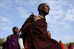 Maasai portrait. Stock Images