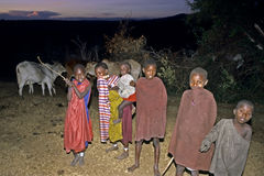 Maasai village life, group portrait young herdsmen. Kenya, Masai Mara, Serengeti, Rift Valley: at sunset, nightfall times the young Maasai herdsmen with the Royalty Free Stock Image