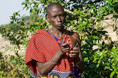 Maasai warrior shows how to use a plant for brushing the teeth. Stock Image