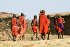 Maasai warrior in their traditional clothes and jewelry walk and meet each other in the manyatta. Stock Image
