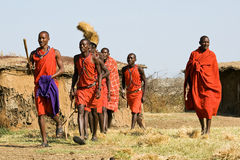Maasai warrior walk in traditional clothes. Stock Photo