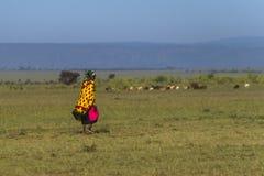 Maasai woman Stock Photos