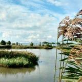 Maasdijk höst Arkivbilder