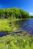 Mabel Lake Wisconsin. Mabel Lake in the Northern Highland American Legion State Forest of Wisconsin royalty free stock image