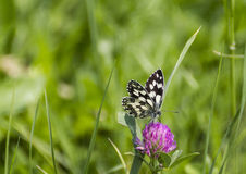 Mabled white stock photos