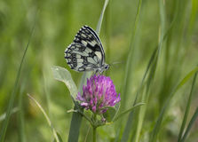 Mabled white Royalty Free Stock Photography