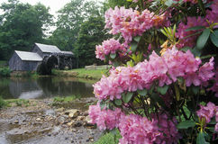 Mabry Mill with flowers in foreground on Blue Ridge Parkway, VA Royalty Free Stock Photo
