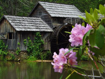 Mabry Mill. Framed with Catawba Rhododendron flowers located on the Blue Ridge Parkway, Southwestern Virginia royalty free stock image