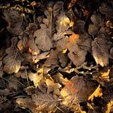 Maca da folha e cores da queda foto de stock
