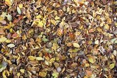 Maca da folha na terra no outono Fotografia de Stock Royalty Free