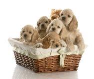 Maca dos filhotes de cachorro Fotografia de Stock