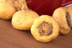 Maca (Peruvian Ginseng) Royalty Free Stock Photos