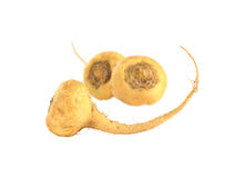 Maca (Peruvian Ginseng). Peruvian Ginseng (Sp. Maca, lat. Lepidium meyenii) which is widely used in Peru for its various health effects and high nutritional royalty free stock photo
