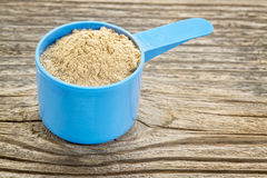 Maca root powder. In a blue plastic measuring scoop against grained wood Royalty Free Stock Image