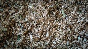 Maca seca da folha imagens de stock