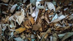 Maca seca da folha fotografia de stock