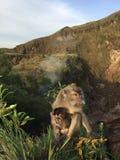 Macaca Fascicularis, krab-Etend Macaque, of Macaque Met lange staart bovenop Onderstel Batur tijdens Zonsopgang in Bali, Indonesi Stock Foto's