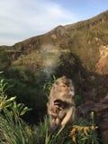 Macaca Fascicularis, krab-Etend Macaque, of Macaque Met lange staart bovenop Onderstel Batur tijdens Zonsopgang in Bali, Indonesi Stock Afbeelding