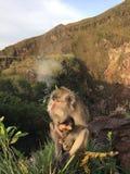 Macaca Fascicularis, krab-Etend Macaque, of Macaque Met lange staart bovenop Onderstel Batur tijdens Zonsopgang in Bali, Indonesi Stock Afbeeldingen