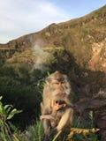 Macaca Fascicularis, krab-Etend Macaque, of Macaque Met lange staart bovenop Onderstel Batur tijdens Zonsopgang in Bali, Indonesi Royalty-vrije Stock Foto