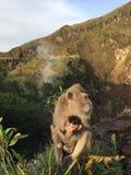Macaca Fascicularis, krab-Etend Macaque, of Macaque Met lange staart bovenop Onderstel Batur tijdens Zonsopgang in Bali, Indonesi Royalty-vrije Stock Afbeeldingen