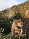 Macaca Fascicularis, krab-Etend Macaque, of Macaque Met lange staart bovenop Onderstel Batur tijdens Zonsopgang in Bali, Indonesi Royalty-vrije Stock Afbeelding