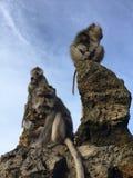 Macaca Fascicularis, krab-Etend Macaque, of Macaque Met lange staart bovenop Onderstel Batur tijdens Zonsopgang in Bali, Indonesi Royalty-vrije Stock Fotografie